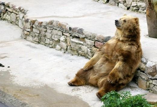 Каунасский зоопарк представлен на фото